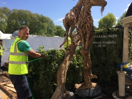 watering plants at chelsea flower show