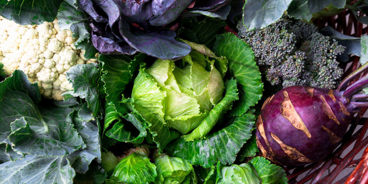 autumn and winter veg