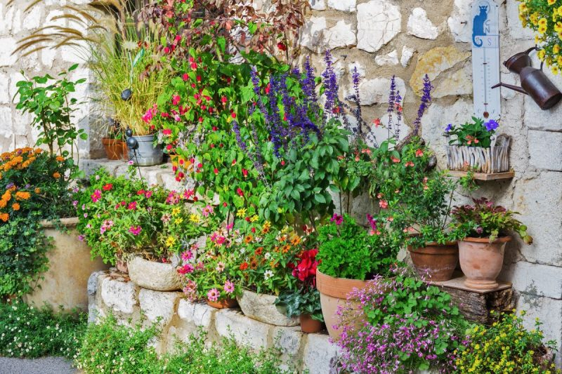 colourful pots of plants